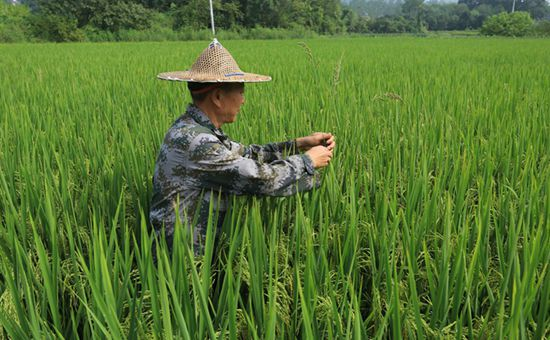 云南腾冲推出保姆式种田服务