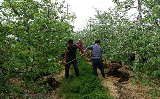 江苏:发展种养循环农业 推进有机肥替代