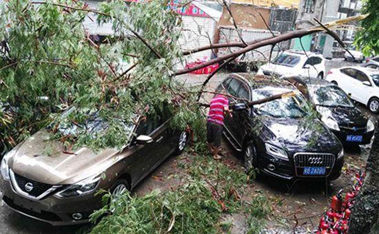"""台风""""天鸽""""袭击深圳 已致2人重伤4人轻伤"""