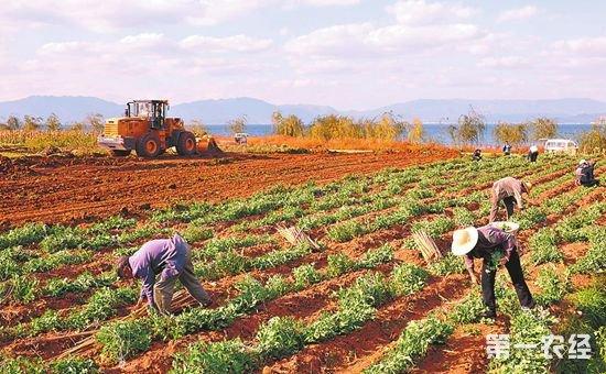 关于农村土地政策 这两点要记住!