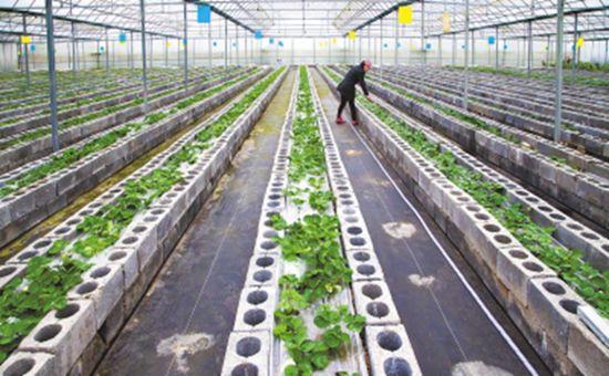中央财政安排6.05亿元资金 支持区域生态循环农业发展