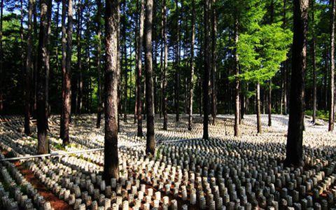 林下养殖都有哪些补贴可以领?一起来了解吧
