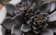 9种又萌又好养的多肉植物介绍!
