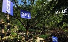 """贵州沿河引进农村企业助民增收 大力发展山地""""生态立体农业"""""""