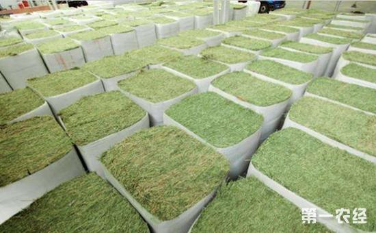 天津对美国转基因苜蓿草实施监督退运处理