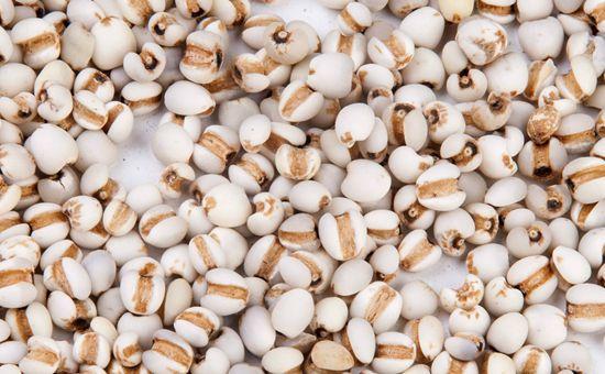 薏仁米产业蓝皮书发布 我国薏仁米产业发展前景被看好