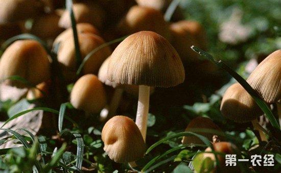 杨树蘑),主要生长在林下,道旁和潮湿的草地上.