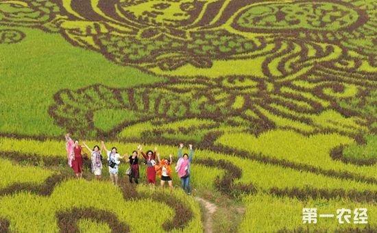 广西:古辣香米推动乡村旅游