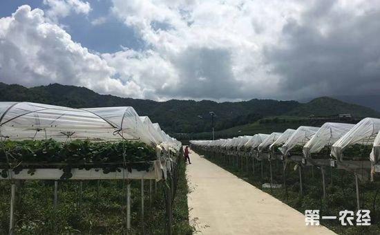 陕西太白:斥资打造国际高端水果基地