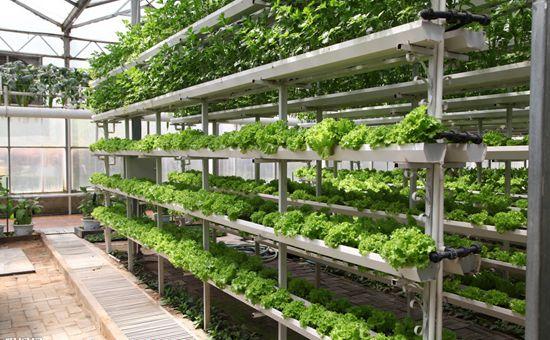青海:科技让高原群众吃上新鲜蔬菜