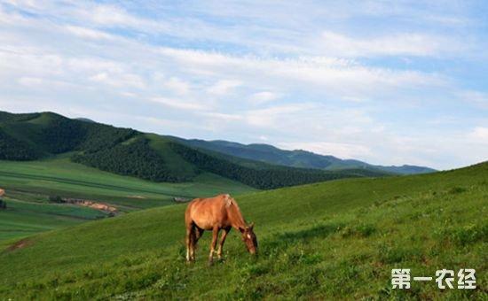 农业部:切实守护好草原资源 推进草原生态文明建设
