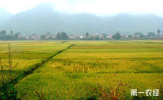 """辽宁省桓仁县是我国的农业大县,近年来,桓仁县依托自身丰富的农业资源,着力促进农业供给侧结构性改革,全面推进农业产业化建设,以实现农村经济的健康发展。   具体工作中,桓仁县以市场为导向,以经济效益为中心,以主导产业、产品为重点,优化组合各种生产要素,实行区域化布局、规模化经营、标准化生产、品牌化营销与企业化管理,积极推进酿酒原料、中药材、优质米、干坚果、食用菌等产业基地建设,不断实施水田节水改造工程、农田水利维修养护等农业基础设施项目,提高劳动生产率、土地生产率、资源利用率和农产品商品率等。同时,桓仁县还充分发挥购机补贴政策拉动作用,大力推广先进适用的农业机械,以优化农机装备结构,助推农业产业化发展。   在精深加工方面,各产业基地也深化与天士力、上药集团等大型企业合作,开发终端产品,推动资源优势向经济优势转化,实现优势产业的链条化发展。在此基础上,桓仁县还先后成立了200余家农民专业合作社和协会等经济合作组织,并大力推广""""公司+基地+农户""""的农业产业化经营方式,围绕各村特色产业加大宣传,积极定位,使桓仁冰酒、山参、大米、大榛子等7个农业特色品牌成功打入国家地理标志保护产品行列。为进一步提升桓仁县农业品牌知名度和影响力注入了新的动力。   目前,桓仁县以葡萄为主的酿酒原料种植基地发展到7万亩,山参保护地62.2万亩,优质稻米基地10万亩,拥有市级以上农事龙头企业近70家,建立农业专业合作社264个,直接带动2.8万户农户致富增收。   在今后一个时期农业产业化的发展过程中,桓仁县还将围绕各乡镇特色产业经济带,以推动农村经济为目标,加大扶持力度,持续不断开发特色农业资源,引进新产业,使桓仁县农业走上自我发展、自我积累、自我调节的良性发展轨道。"""