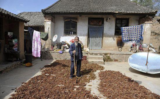 <b>宁夏:对贫困村推进精准培育产业</b>