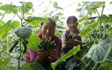 创新助推功能农业发展|2017山西特色农产品交易会将举行