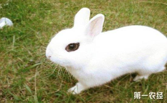 壁纸 动物 兔子 550_340