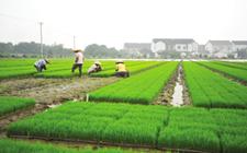 方桂红:回乡开展生态种养场 带动贫困户发家致富