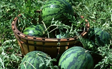 2017全国农资科技展暨全国品牌农产品交易会于9月1日开幕