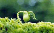 现代农业格局之下,小定位更容易有大成就