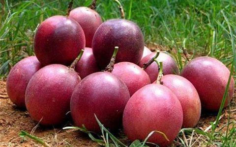 贵州从江县千亩百香果迎来丰收季