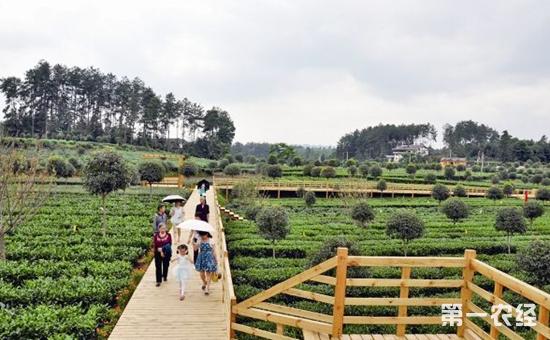 """湄潭以茶立县,被称为贵州茶叶第一县,中国第二大产茶区,拥有""""茶海""""、""""茶壶""""、""""茶汤""""、""""茶城""""、""""茶村""""5张名片。其中""""中国茶海""""是目前世界最大的连片茶园,面积达6万亩,在2010年被评为贵州省""""十大魅力景区""""之一。而""""天下第一茶壶""""""""实物造型,壶高73."""