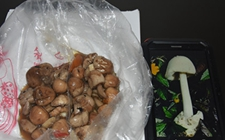 <b>湖北:采食花坛野蘑菇导致食物中毒 七旬老夫妻双双住院治疗</b>