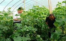 我国将投入15亿元培育新型职业农民百万人以上