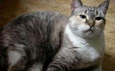 猫肾衰竭是由什么引起的?猫肾衰竭的原因