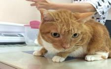 猫肾衰竭能活多久?还有救吗?