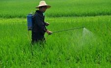 环保形势依然紧张 农药市场供不应求价格有望上涨