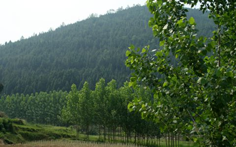 林业新政:国家将大力培育适度规模经营主体
