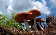 <b>湖南:一锅野生蘑菇汤毒倒了11人 谨防蘑菇中毒事故</b>