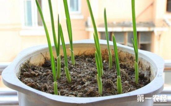4种适合在花盆里种植的懒人蔬菜介绍!