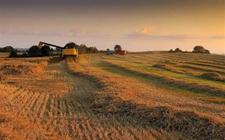 干农业失败的人往往有这些特征