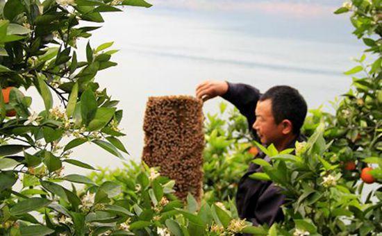 """黑龙江大兴安岭:在林业里发展起了""""甜蜜产业"""""""