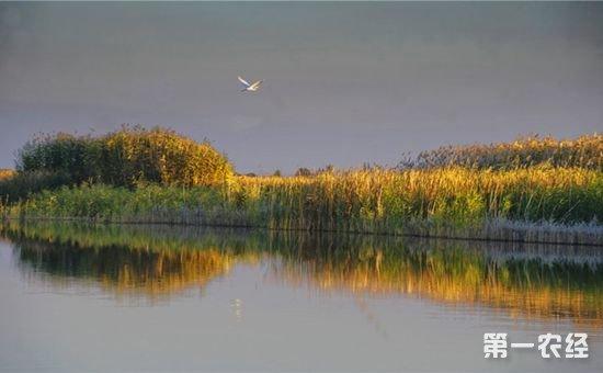 新疆玛纳斯湿地得到修复 新增200种鸟类