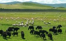 <b>青海海东:优化农牧业产业结构 积极建设可持续发展新农业</b>