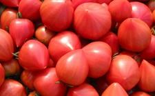 食用尖头西红柿可致癌?专家:说法不可信
