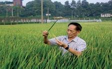 袁隆平:青岛2019年示范海水稻面积将达10万亩