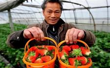 """""""网红""""电商加码""""订单式农业""""助上海农民转型"""