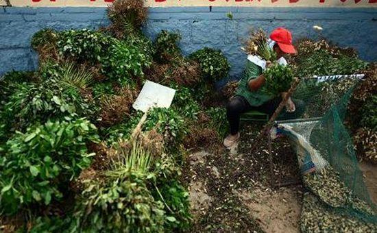 山东乳山市:把现代农业发展成果运用到扶贫领域中去