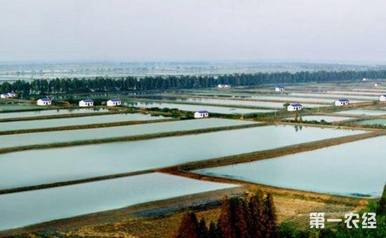 湖北:新型经营主体已超过22万个 土地规模经营面积达2686万亩