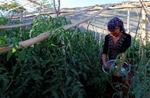 庭院经济助力托里县加快农村经济发展