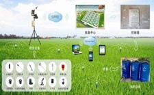 """智慧科技改变传统农业 IT精英变身""""现代农夫"""""""