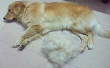 狗为什么会脱毛?狗脱毛严重露皮怎么办?
