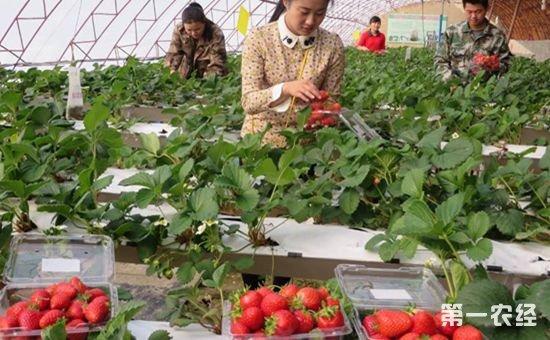 三个好的农业项目推荐 不仅可以赚钱还有补贴可拿