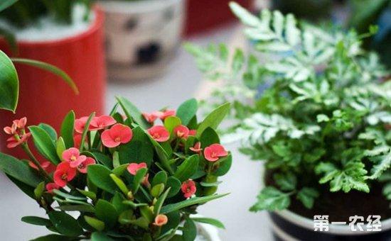 盆栽植物缺肥的常见症状介绍!对症施肥才能发挥功效