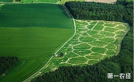 德国:有机农业已成为农业重要支柱