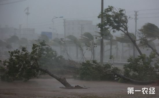 中央气象台首次明确表示将台风命名权归属给公众