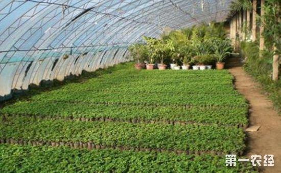 农业合作社新政出台 合作社管理将更加规范