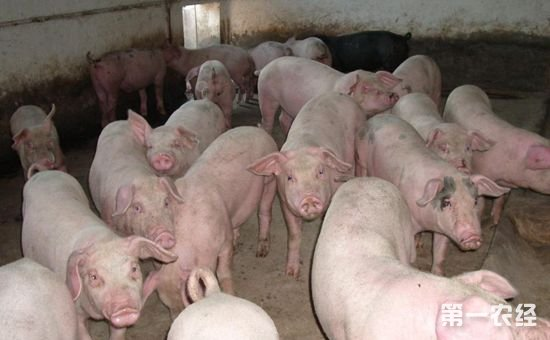 第一个生猪生产发展规划发布 2017最新补贴也出台啦!